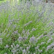 Aromatherapy oils Wellington