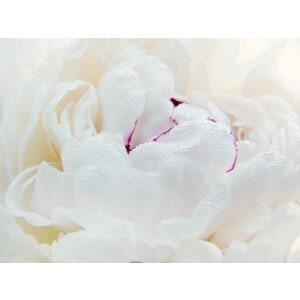 Restoring cream to improve the skin health