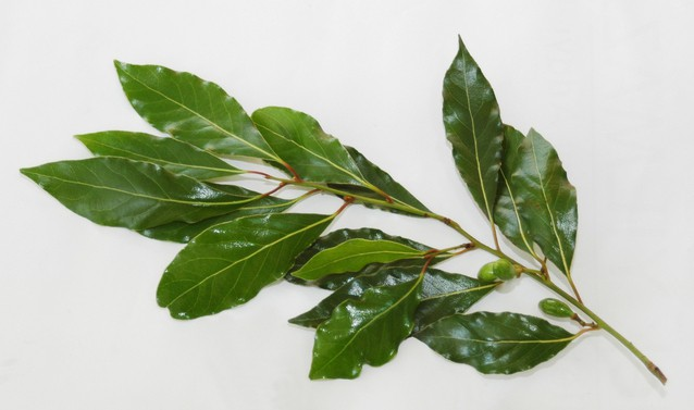 Recipes with Bay Laurel Essential Oil