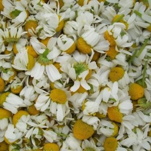 Recipes with Chamomile Essential Oil