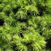 Recipes with cypress essential oil