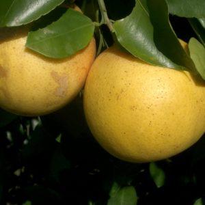 Recipes with grapefruit essential oil
