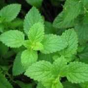 Recipes with peppermint essential oil
