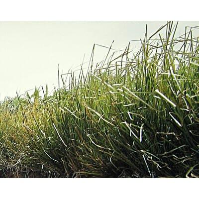 Vetiveria zizanoides